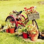 Vuoi arredare da zero il tuo giardino di casa?