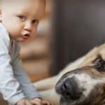 Consigli neonati: animali si o animali no?