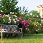 Progettazione e realizzazione giardini all'inglese