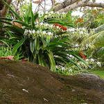 Sulla traccia delle orchidee
