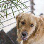 Perché assicurare il proprio cane può essere conveniente