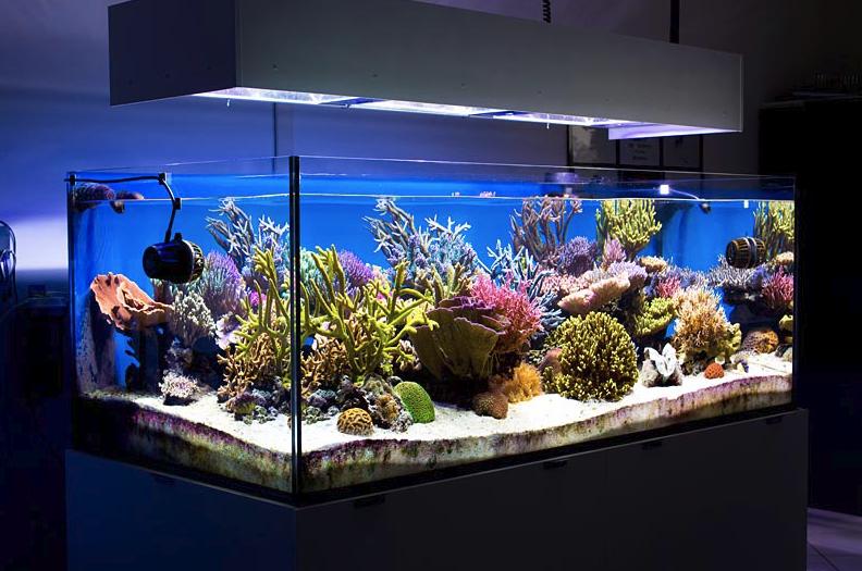 Acquario di acqua dolce aziende news for Cerco acquario per tartarughe usato