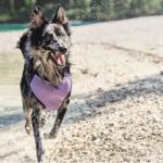 Una fresca estate per il tuo cane