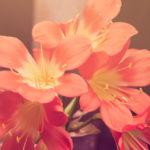 I fiori più adatti per il compleanno della mamma