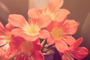regalare fiori