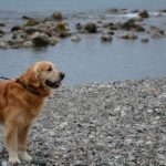 Come viaggiare insieme al proprio cane: 4 consigli