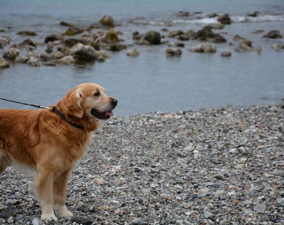come viaggiare con il cane