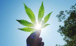 cannabis legale cosa serve