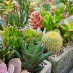 Cactusmania, l'arte delle piante grasse