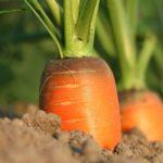 Assicurazione Agricola: Ecco cosa copre